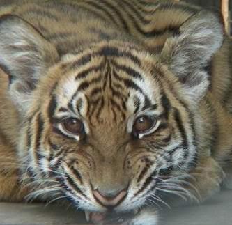 非洲野生动物基金会 标志