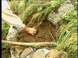 幼-小穴_小穴整地造林技术是太行山的群众和林业科技人员是山造林中摸索出来的