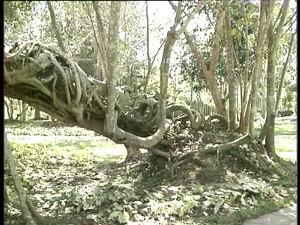 西双版纳热带植物园(2005.2.7)