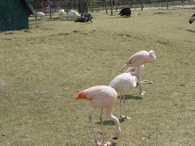 沈阳冰川动物乐园