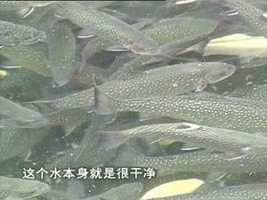 最名贵的冷水观赏鱼_什么兰花最名贵_世界上最名贵 ...
