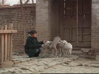 细犬(2005.12.15)