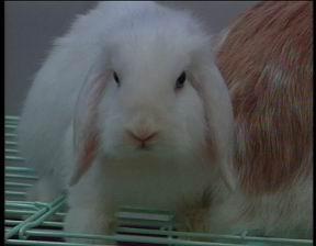 我系宾尼兔