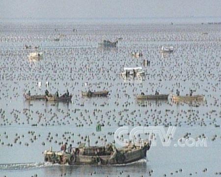 田吉豹所驾驶的渔船主要在日本海作业.图片