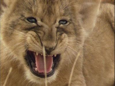 神奇的非洲动物之旅